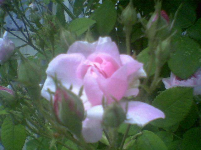 Latest_Photo0009