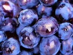 purple-grapes-closeup